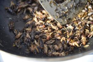 Cvrček na másle, recept, jedlý hmyz